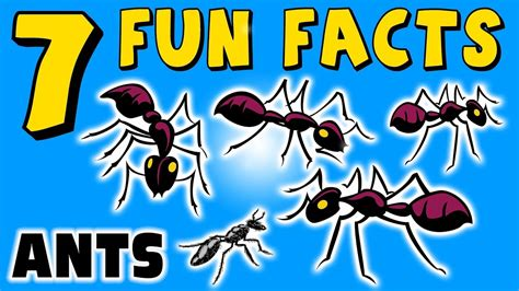 fun facts about ants for preschoolers facts about ants for preschoolers 219