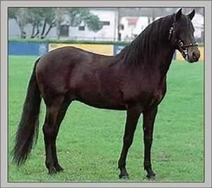 Bilder Von Pferden : pferderasse alt r real rasseportrait alt r real kaufen alt r real verkaufen ~ Frokenaadalensverden.com Haus und Dekorationen