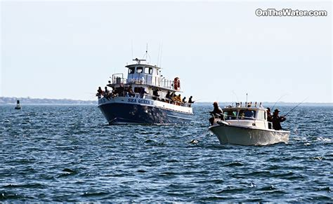 Big Boat Runs Over Fishermen by Cape Cod And Buzzards Bay Fishing Report For 5 15 2014