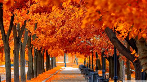 Orange Fall Wallpaper by Wallpaper Fall Hd Wallpapers With And Orange