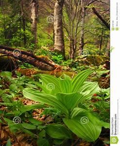 Rainforest Vegetation Royalty Free Stock Image