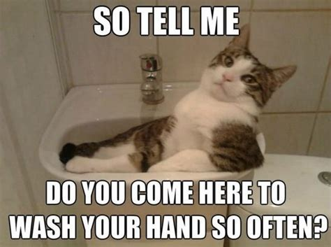 Funny Meme Pictures 2014 - meme 2014 cat acting smooth