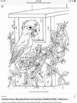 Stained Bird Dover sketch template