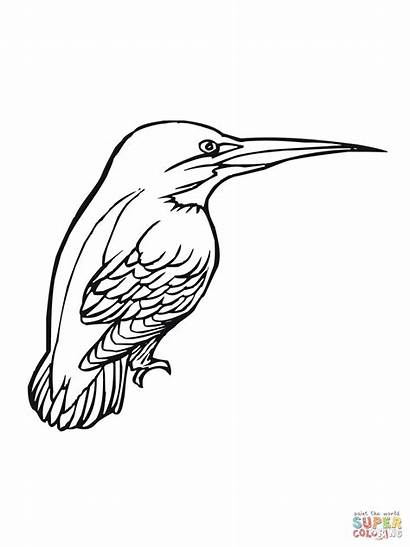 Kingfisher Coloring Bird Pages Printable Birds Kingsfisher