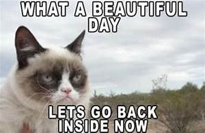 35 Most Funniest Grumpy Cat Memes On The Internet