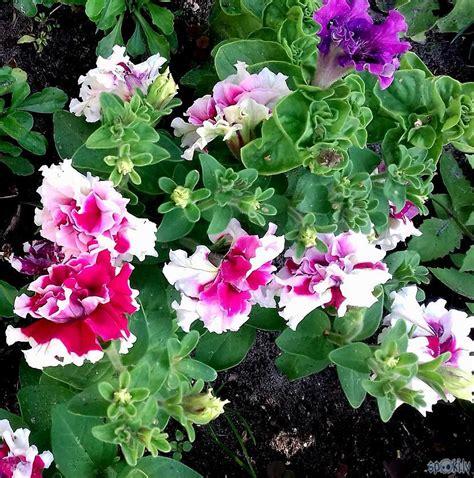 Atkal tikai puķes - Spoki - bildes 2