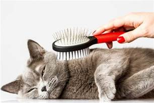 cat shedding cat hair everywhere how to deal with shedding the