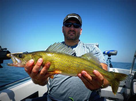 walleye leech lake july