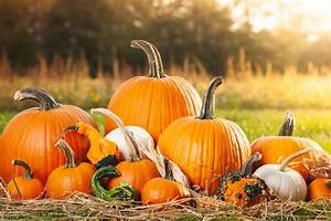 How, To, Make, Pumpkins, Last, All, Fall, Preserving, Whole, U0026, Carved, Pumpkin