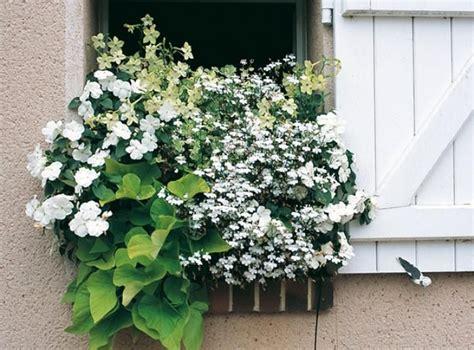 les 25 meilleures id 233 es concernant jardini 232 res aux fen 234 tres sur fleurs dans bo 238 te de