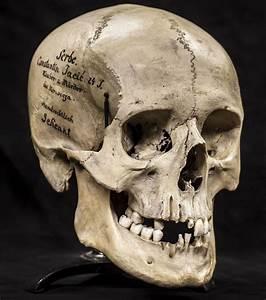 skulls, human - Google Search   Skulls   Pinterest ...