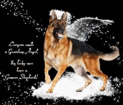 Quotes German Shepherd Gsd Dog Malinois Belgian