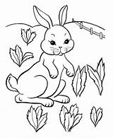 Coloring Rabbit Easter Pages Printable sketch template