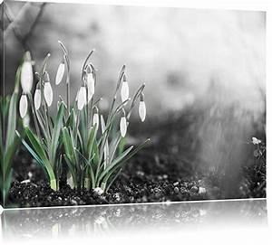 Schwarz Weiß Bilder Gerahmt : fr hlings schneegl ckchen schwarz wei format 60x40 auf leinwand xxl riesige bilder fertig ~ Watch28wear.com Haus und Dekorationen