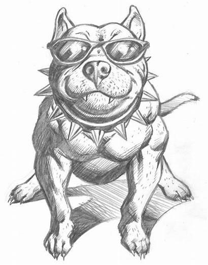 Pit Bull Dog Pitbull Drawings Drawing Sketch