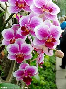 Schöne Orchideen Bilder :  ~ Orissabook.com Haus und Dekorationen