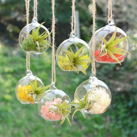 small hanging glass vase air plant terrarium by dingading