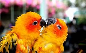 Wallpaper Hd Cute Parrots Love