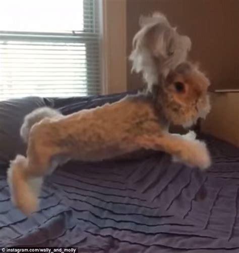 super cute rabbit  unbelievably big ears