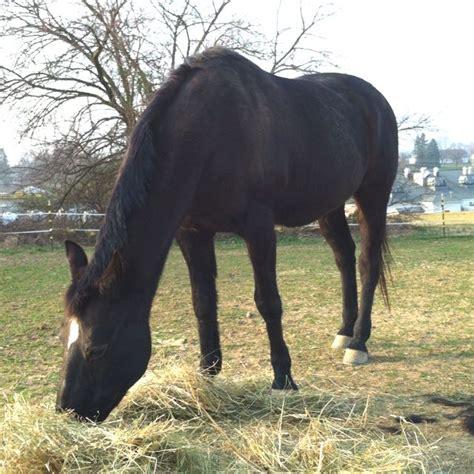animals animal horses horse uploaded
