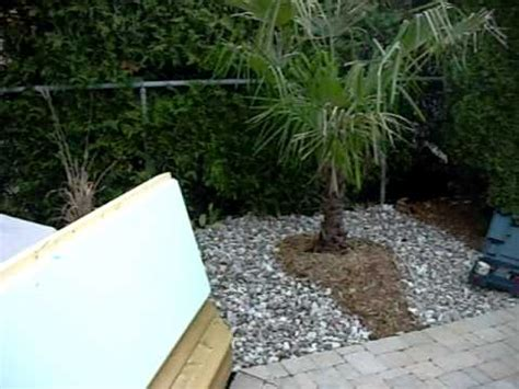 truffaut siege social le palmier trachycarpus fortunei jardinerie truffaut tv