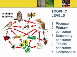 Principles of Ecology. - ppt video online download