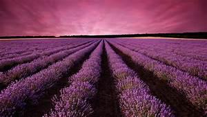 Wallpaper, Lavender, Field, Sky, Mountain, Provence, France