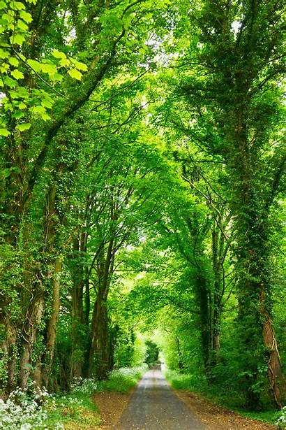 Nature Trees Tree Road Forest Narrow Lined