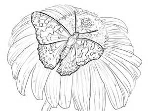 painted lady butterfly sits   flower coloring page  printable coloring pages
