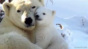 Polar Bear Cute Animal GIF - Find & Share on GIPHY