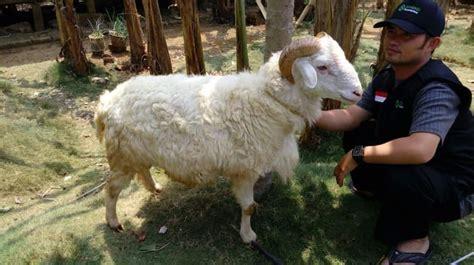 Penyembelihan secara mekanik yang melanggar ketentuan syar'i seperti dengan cara menyetrum hewan, hukumnya dilarang. Batas Waktu Berkurban Idul Adha - Wulan