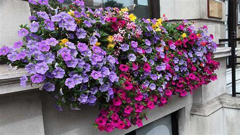Hängende Blumen Balkon by Blumenk 228 Sten Bepflanzen So Klappt Es Mit Der Bl 252 Tenpracht