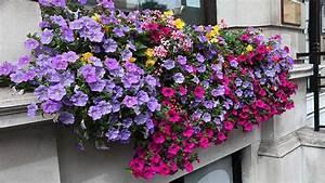 Blumenkästen Bepflanzen Sonnig : blumenk sten bepflanzen so klappt es mit der bl tenpracht ~ Frokenaadalensverden.com Haus und Dekorationen