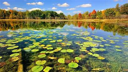 Pond Wallpapers