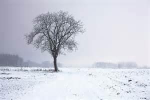 lone tree in winter landscape free stock photo