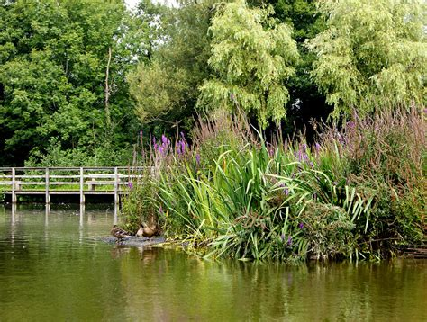 Cwmbran Boating Lake by Nathan James Woolls Graphic Web Design 187 Cwmbran