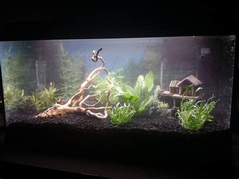 mise en eau aquarium photos d aquarium page 264