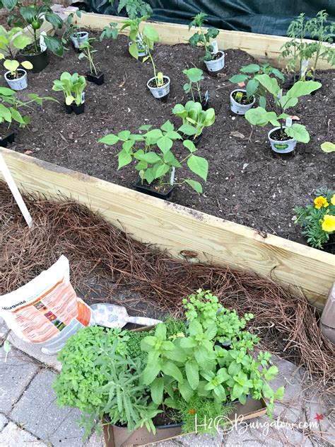 How To Build A Raised Vegetable Garden Bed H2obungalow