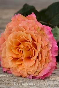 premium scented garden free spirit