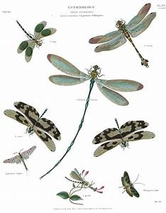 1000  Images About Dragonfly Anatomy On Pinterest