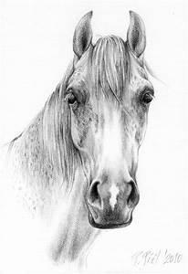 Gallery: Horses Pencil Drawing, - DRAWING ART GALLERY