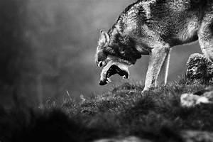 snarling dog | Tumblr