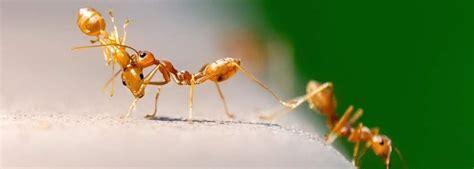 ameisen bekaempfen solingen nachtigall hygiene technik