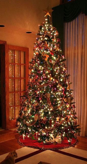 Ee  Christmas Ee   Trees High Ceilings And Trees On Pinterest