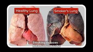 Science Video Vocab  The Dangers Of Smoking
