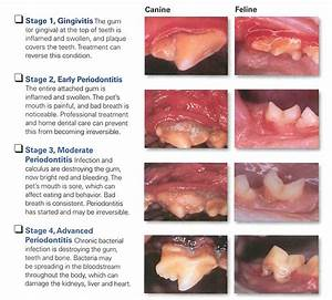 dental disease and july offer