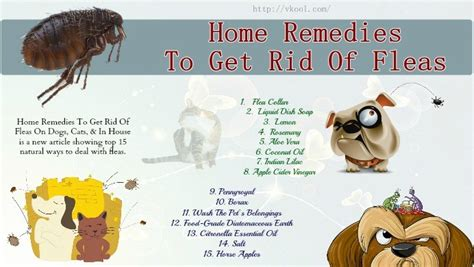 how to rid fleas in house 15 home remedies to get rid of fleas on dogs cats in house