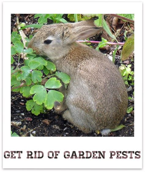 17 Best Images About Garden Pests On Pinterest Gardens