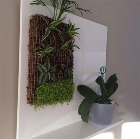 petit mur vegetal  support fait maison mur vegetal