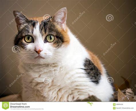 gato gordo de la navidad que se sienta en caja de regalo desechada 161 como hacen de archivo